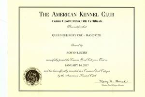 AKC Canine Good Citizen - Queen Bee Roxy