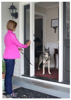 Dog door manners 2